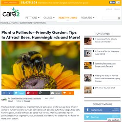Plant A Pollinator-Friendly Garden: Tips To Attract Hummingbirds And More!