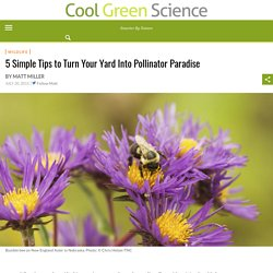 5 Simple Tips to Turn Your Yard Into Pollinator Paradise – Cool Green Science