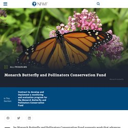Monarch Butterfly and Pollinators Conservation Fund