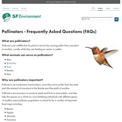 SFENVIRONMENT_ORG - Pollinators - Frequently Asked Questions (FAQs)