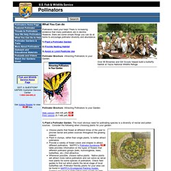 Pollinators: How You Can Help