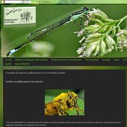 Connaître les insectes pollinisateurs et les accueillir au jardin