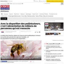 Avec la disparition des pollinisateurs, c'est l'alimentation de millions de personnes qui est menacée