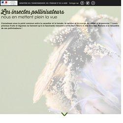 Les insectes pollinisateurs nous en mettent plein la vue - Ministère de l'Environnement, de l'Énergie et de la Mer