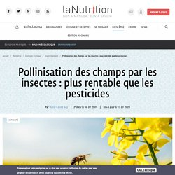Pollinisation des champs par les insectes: plus rentable que les pesticides