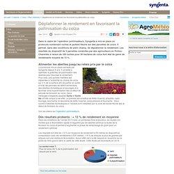 Pollinisation du colza - Jachère fleurie - Rendement du colza - Syngenta