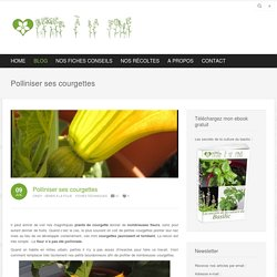 Polliniser ses courgettes