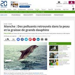 Manche: Des polluants retrouvés dans la peau et la graisse de grands dauphins
