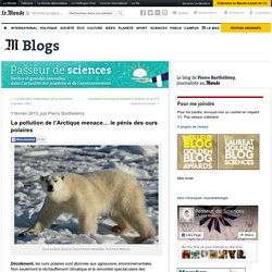 La pollution de l'Arctique menace… le pénis des ours polaires