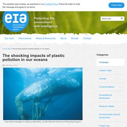 The shocking impacts of plastic pollution in our oceans – EIA International