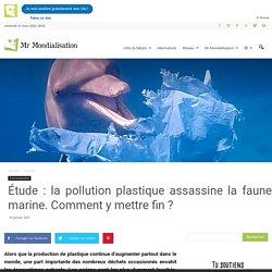 Étude : la pollution plastique assassine la faune marine. Comment y mettre fin ?