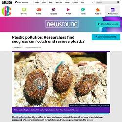 Plastic pollution: Researchers find seagrass can 'catch and remove plastics' - CBBC Newsround