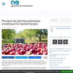 AGRICULTURE ENVIRONNEMENT 29/04/19 Pourquoi les pommes polonaises envahissent le marché français