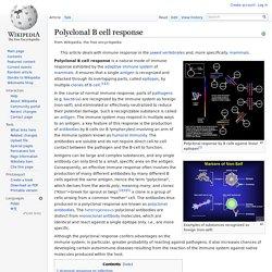 Polyclonal B cell response