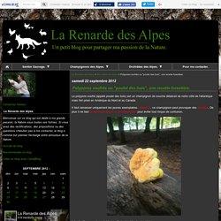 """Polypores soufrés ou """"poulet des bois"""", une recette forestière. - La Renarde des Alpes"""