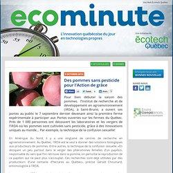 Des pommes sans pesticide pour l'Action de grâce - Ecominute