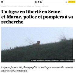 1. Information : un tigre en liberté en Seine-et-Marne