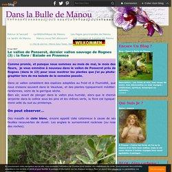 Le vallon de Ponserot, dernier vallon sauvage de Rognes (3) : la flore / Balade en Provence - Dans la Bulle de Manou