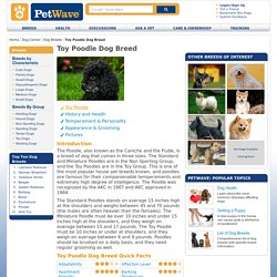 Information on Toy Poodles