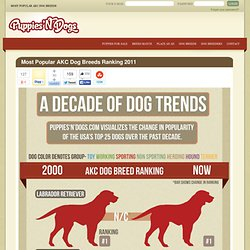 Top 10 AKC Dog Breeds [Infographic]