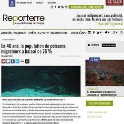 En 46 ans, la population de poissons migrateurs a baissé de 76%