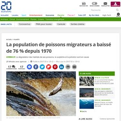 La population de poissons migrateurs a baissé de 76 % depuis 1970 Le 29 juillet 2020