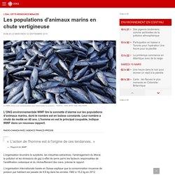 Les populations d'animaux marins en chute vertigineuse