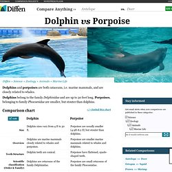 Dolphin vs Porpoise - Difference and Comparison