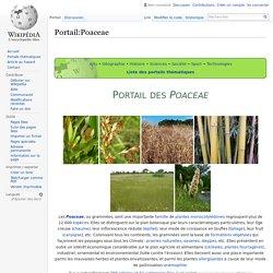 Portail:Poaceae