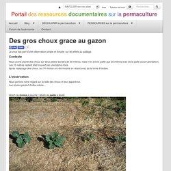 Portail RP.fr : ArticleDesGrosChouxGraceAuGazon