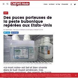 CNEWS 17/08/17 Des puces porteuses de la peste bubonique repérées aux Etats-Unis