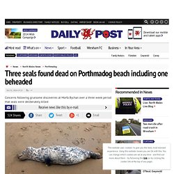 Three seals found dead on Porthmadog beach including one beheaded