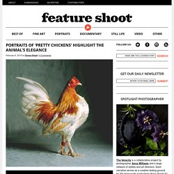 Portraits of 'Pretty Chickens' Highlight the Animal's Elegance