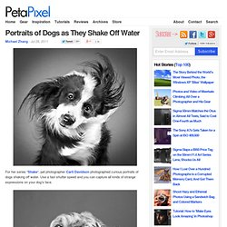 Portraits of Dogs as They Shake Off Water - StumbleUpon