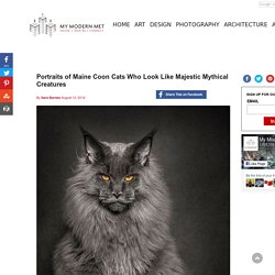 Portraits of Maine Coon Cats Who Look Like Majestic Mythical Creatures