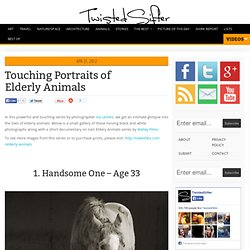 11 Touching Portraits of Elderly Animals