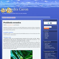 Posidonia oceanica in english