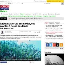 Il faut sauver les posidonies, ces plantes à fleurs des fonds sous-marins- 10 février 2015