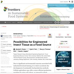 Possibilities for Engineered Insect Tissue as a Food Source