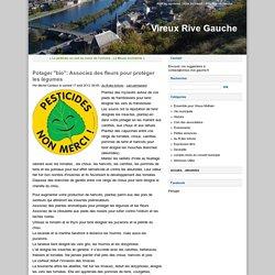 """Potager """"bio"""": Associez des fleurs pour protéger les légumes - Vireux Rive Gauche"""