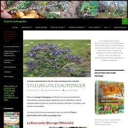 5 fleurs utile au potager