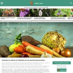 Potager : 18 légumes à ne surtout pas associer au potager !