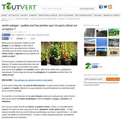 Jardin potager : quelles sont les plantes que l'on peut cultiver sur un balcon ?