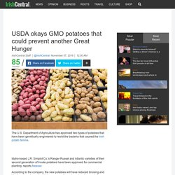 IRISH CENTRAL 07/11/16 USDA okays GMO potatoes that could prevent another Great Hunger