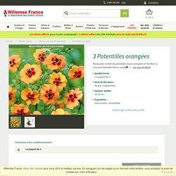3 potentilles orangées - Achat (potentilla x tonguei) - Willemse