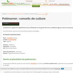 Potimarron : semis, plantation, culture et récolte