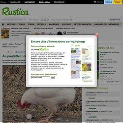 Au poulailler : des poules mangeuses d'oeufs