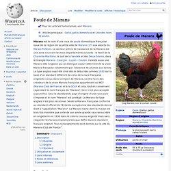 Poule de Marans