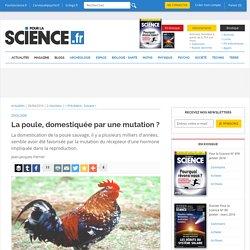 La poule, domestiquée par une mutation?