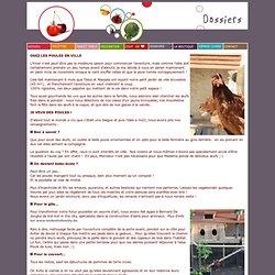 Osez les poules en ville ~ Dossier ~ Tomate Cerise ~